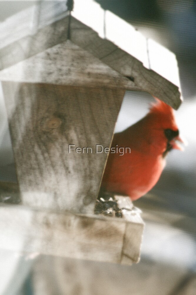 Male Cardinal  by Fern Design