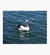 Pelican Percy Photographic Print