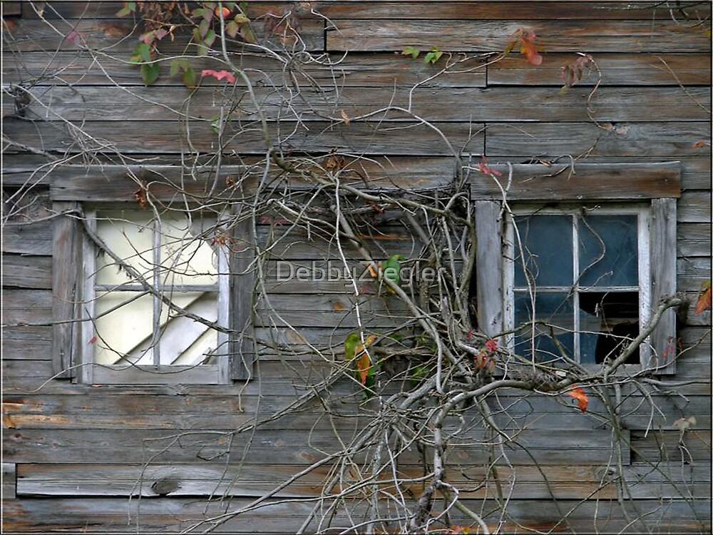windows. . ..  by DebbyZiegler