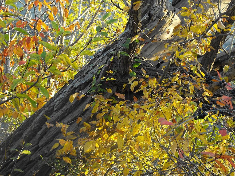 Tree Trunk by ArianaMurphy