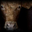Cow Eyes by TingyWende