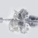 Winter Kaninchen von PearTreePond