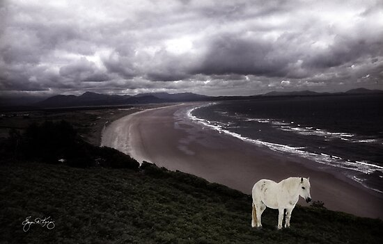 Spirit Pony Above Welsh Coastline by Wayne King
