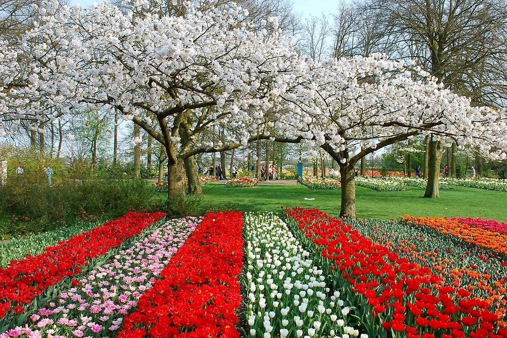 Blooming Keukenhof by Arie Koene