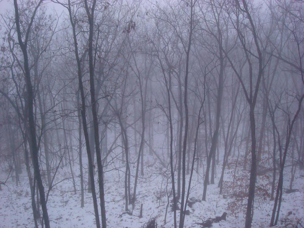 winter fog ~ woods by cynthia  brown