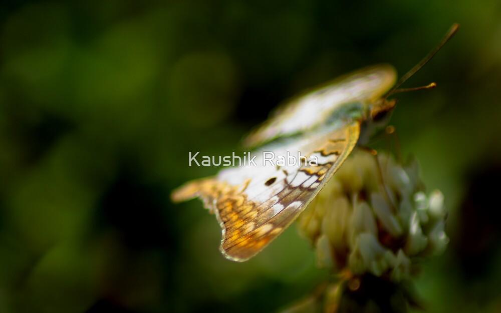 Colors by Kaushik Rabha