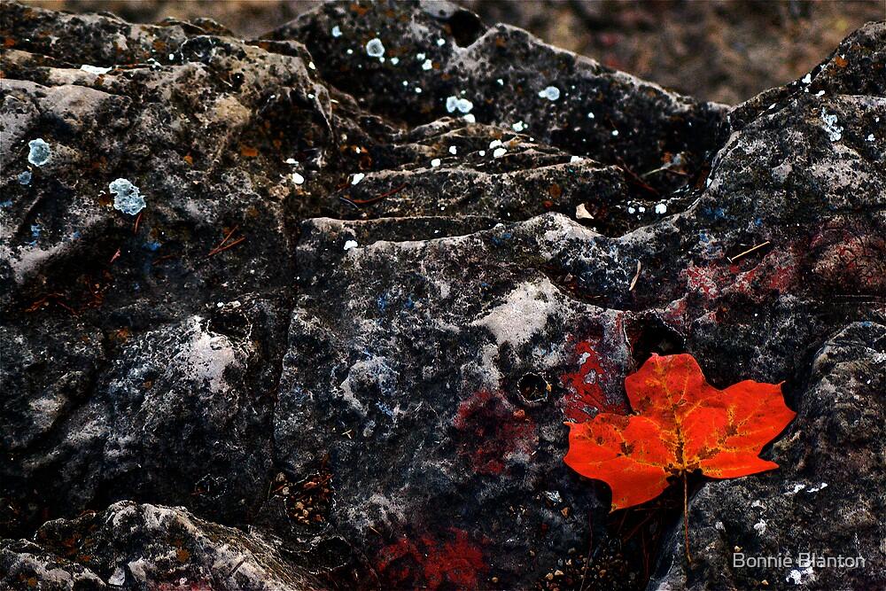 Autumn Leaves by Bonnie Blanton