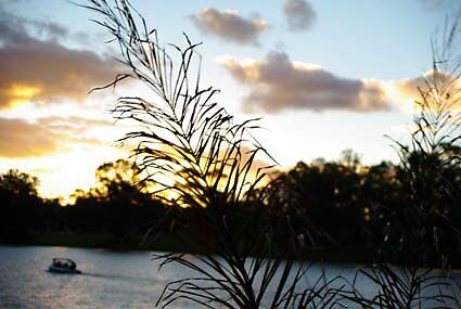 Sunset with palm leaf by Christie-Anne  Piggott