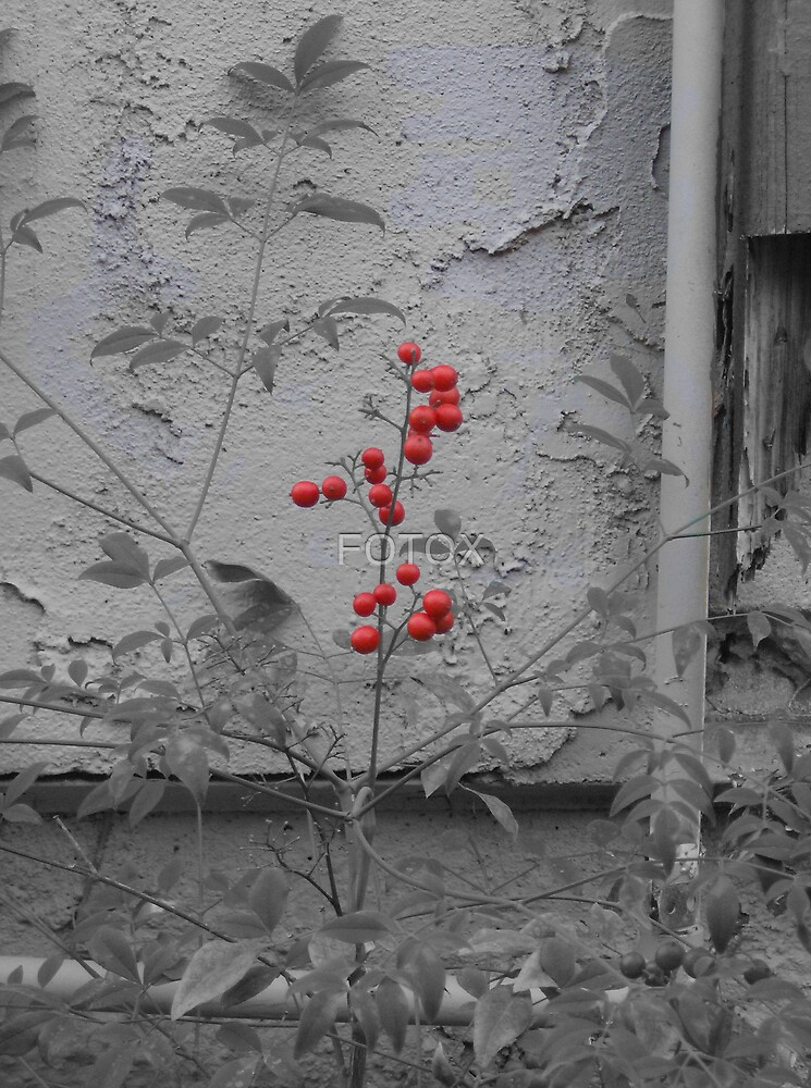 The Red Berry by FOTOX