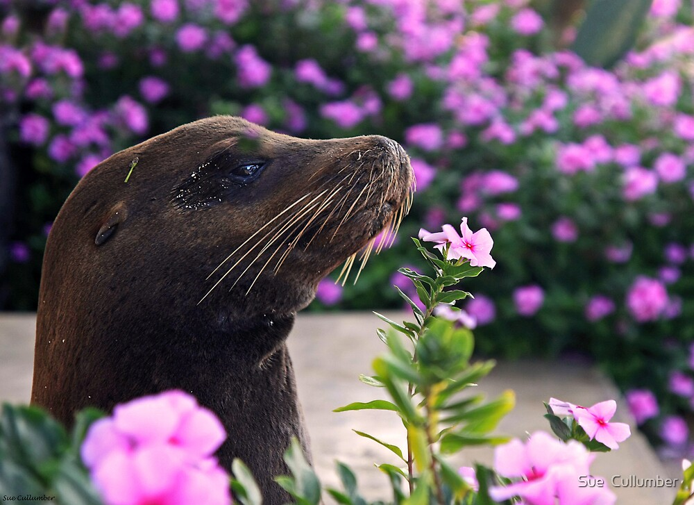 Smell the Flowers by Sue  Cullumber