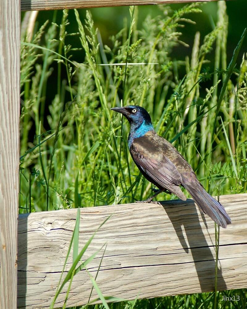 Bird on a fence by Jinx13