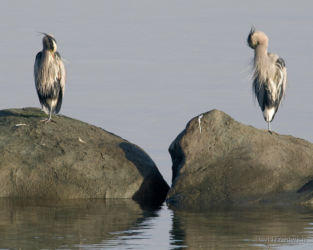 My Rock, or Yours? by David Friederich
