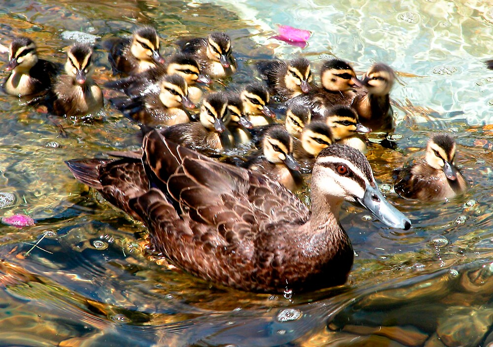 Family outing by Lynette Higgs