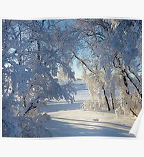 Snow caked trees Poster