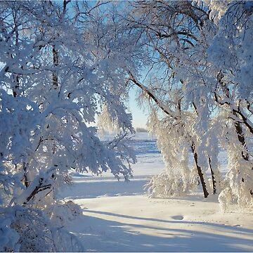 Snow caked trees by NicoleK-design