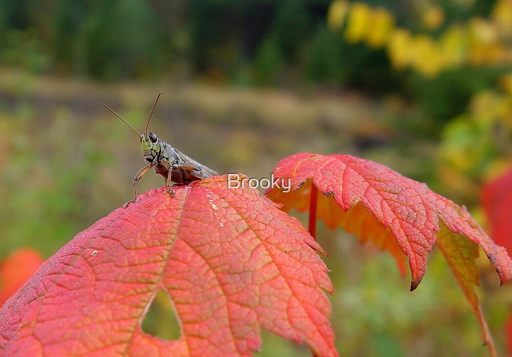 Grasshopper by Brooky