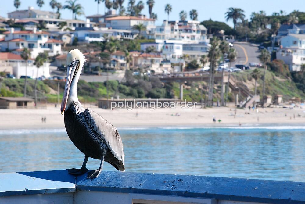Pelican on the Pier by polylongboarder