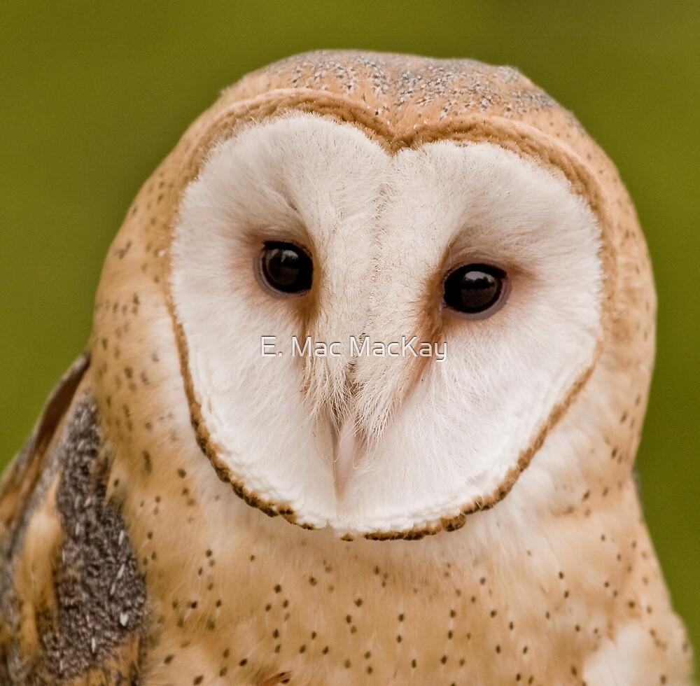 Owly by E. Mac MacKay