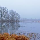 Mist over the winter marshland by xophotography
