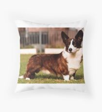 cardigan welsh corgi brindle white full Throw Pillow