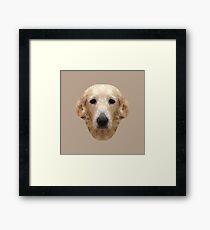 The Golden Retriever - Chloe Framed Print