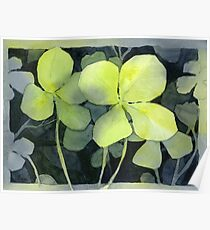 Lucky Charm Four Leaf Clover Watercolor Poster
