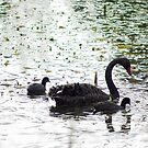 Black Swan by Deborah McGrath