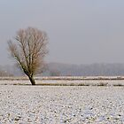 Lone tree in a snow meadow by xophotography