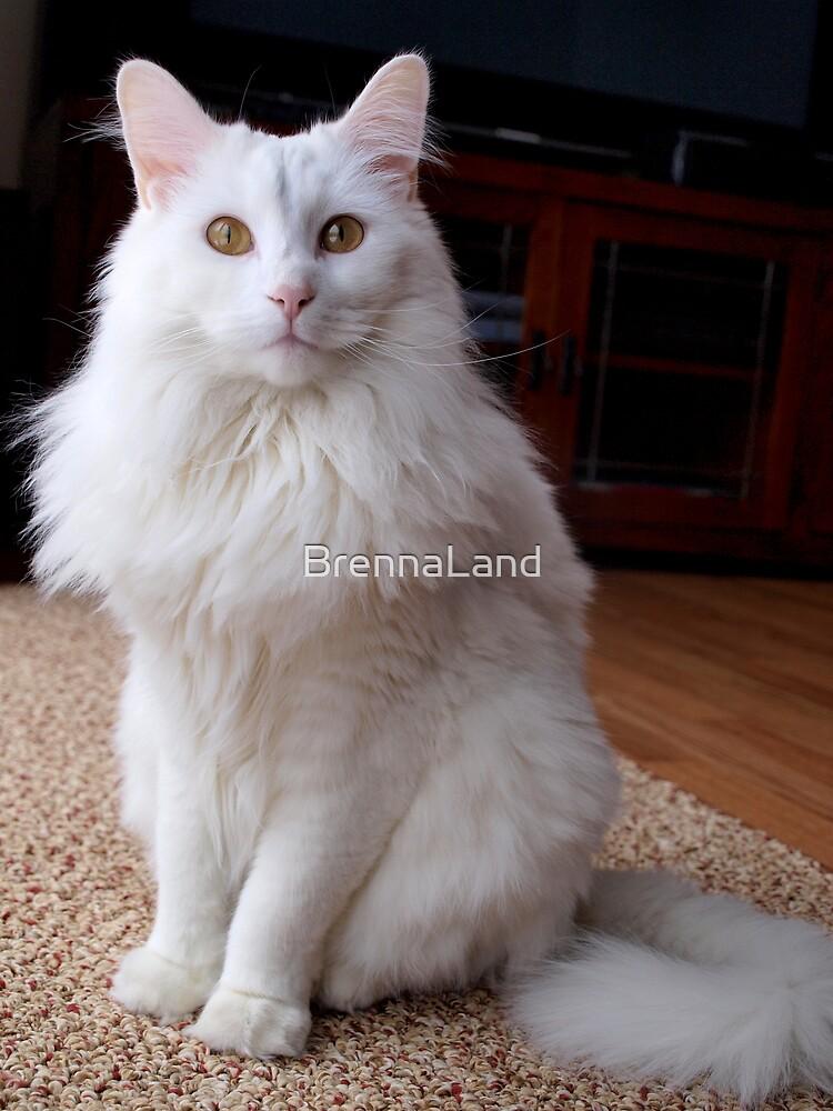 White Cat by BrennaLand