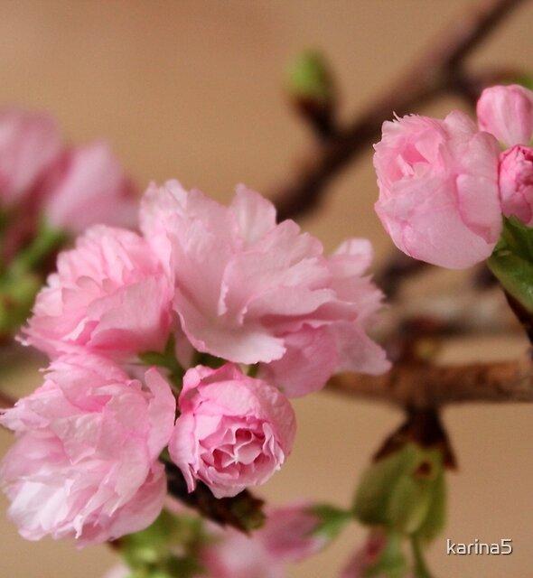 Spring  by karina5