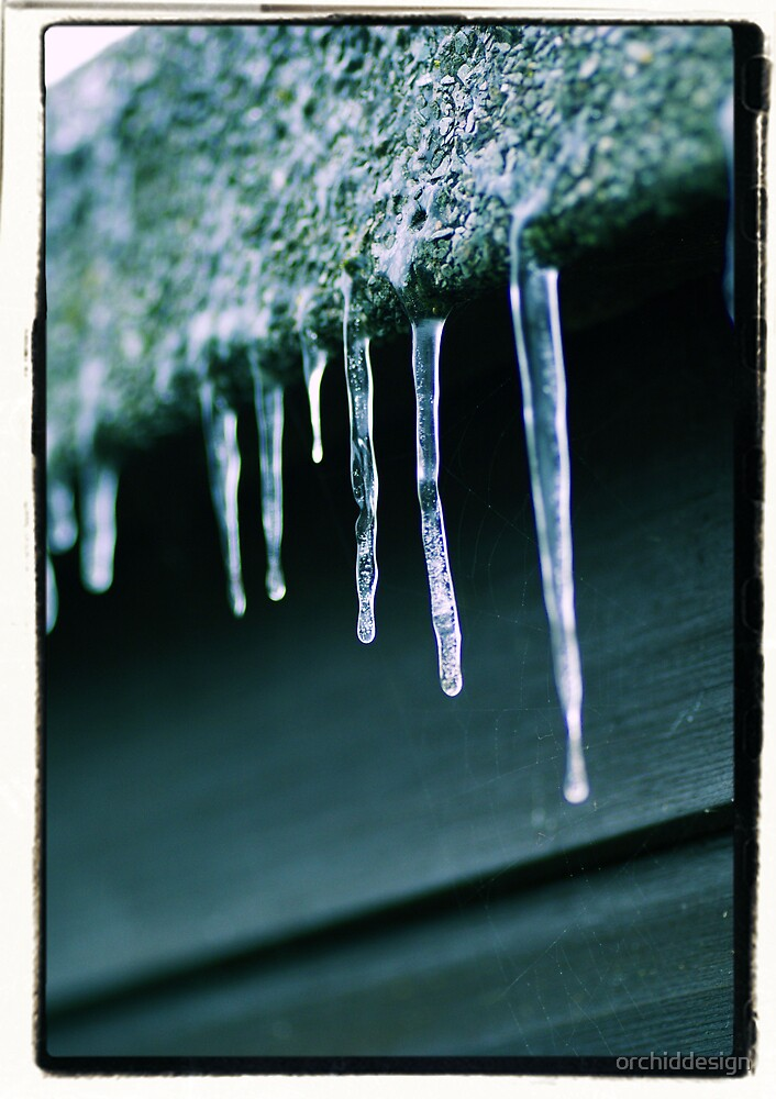 icicle, icicles, drip, frozen, icy, cold, frosty by orchiddesign