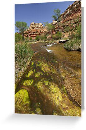 Calf Creek, Calf Creek Campground, Utah by Brian Hendricks