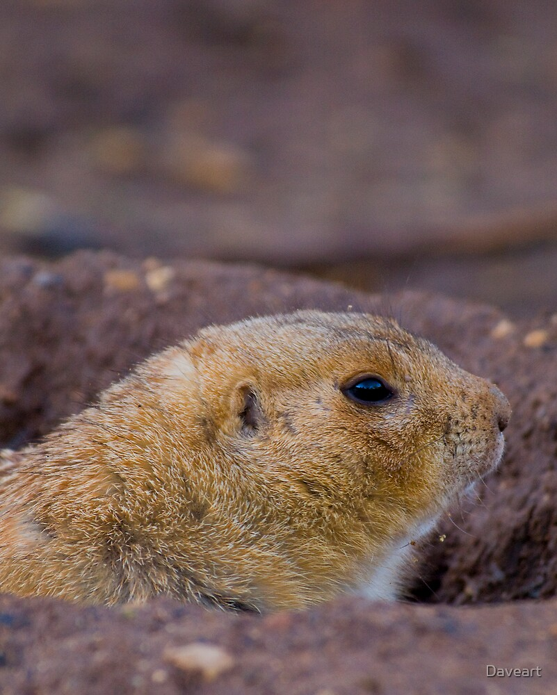 Prarie Dog by Daveart