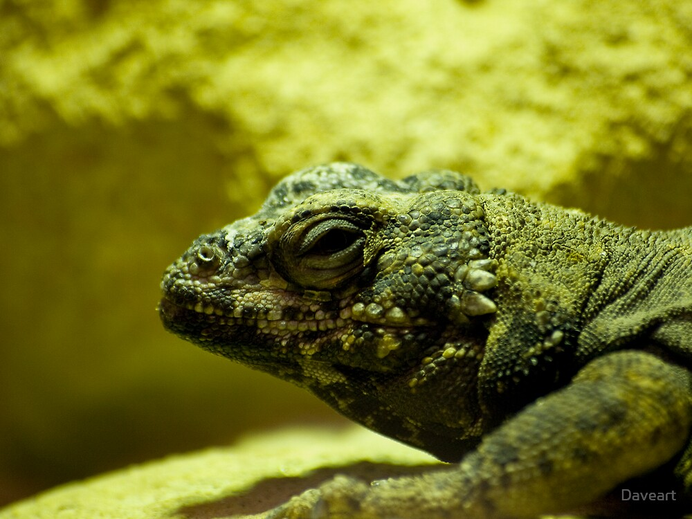 Closeup of a lizzard by Daveart