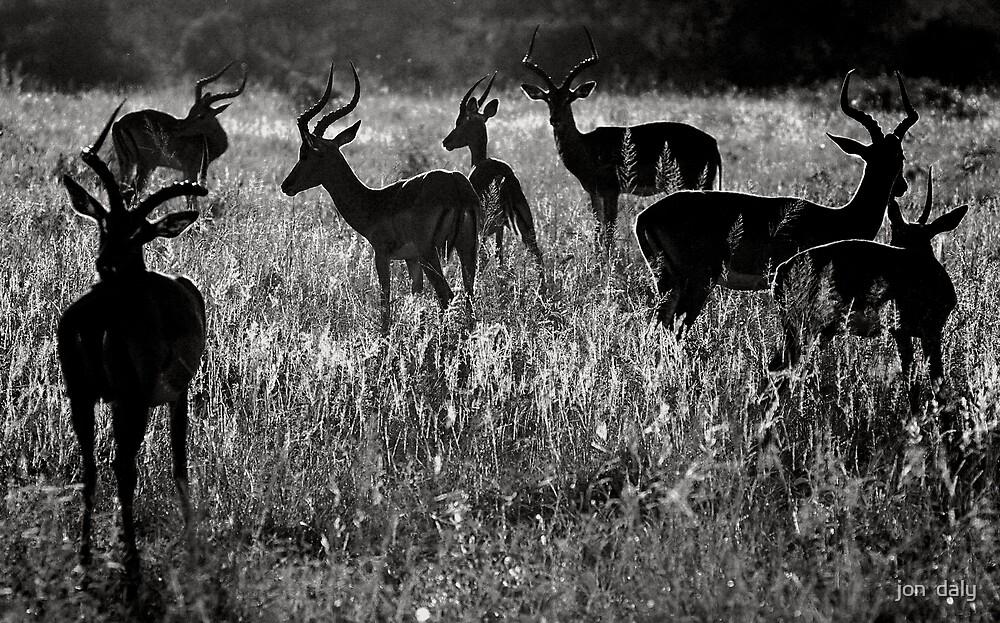 kudu  by jon  daly