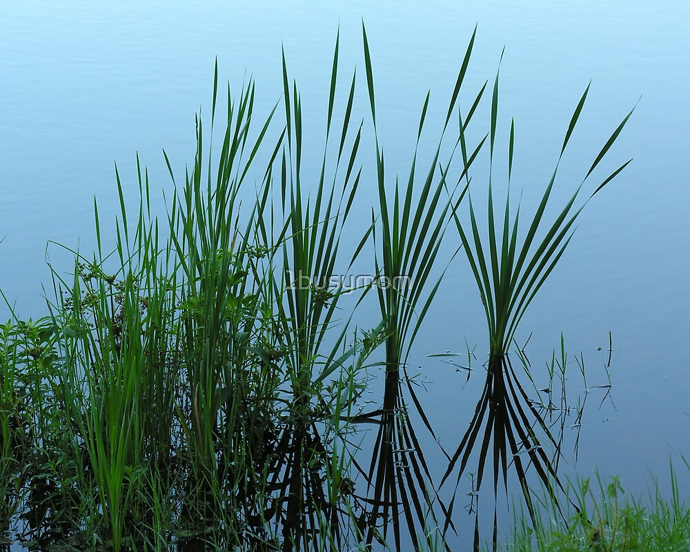 reeds along the river shore by 1busymom