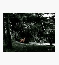 Fawn in a Green Wood Photographic Print