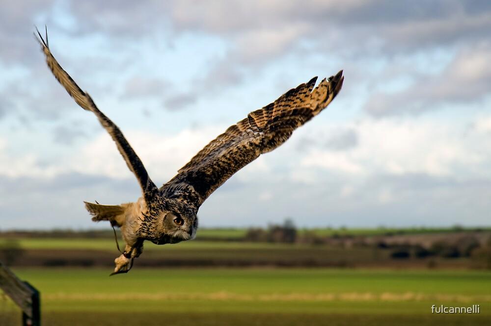Owl in flight by fulcannelli
