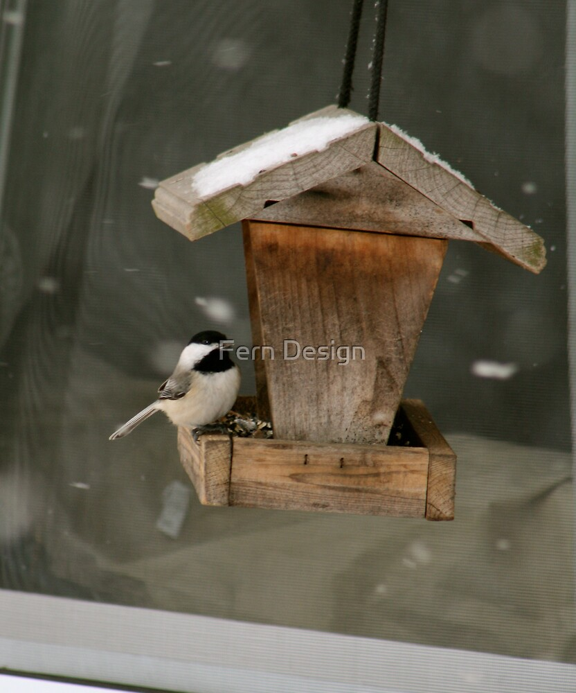 Black-Capped Chickadee  by Fern Design