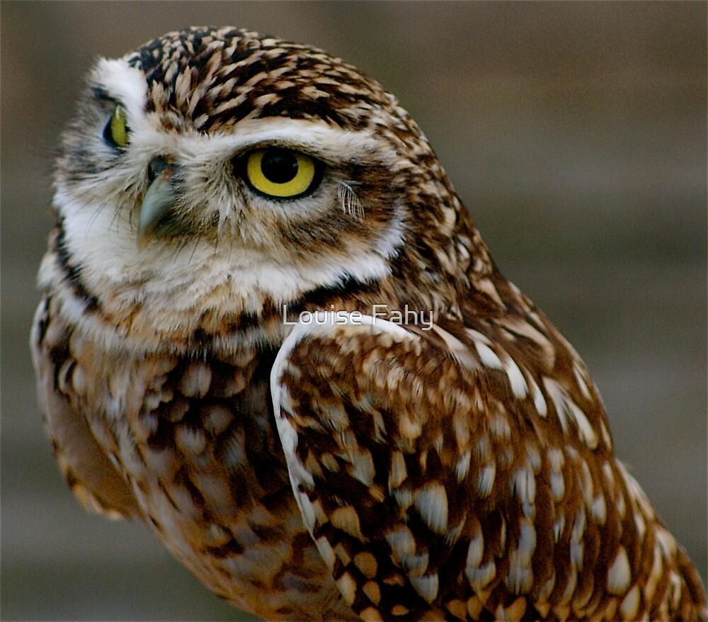 Little Owl (Basil) by Louise Fahy
