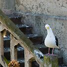 Confused Seagull by Reese Ferrier