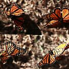 Dance of the Monarchs by Anne-Marie Bokslag