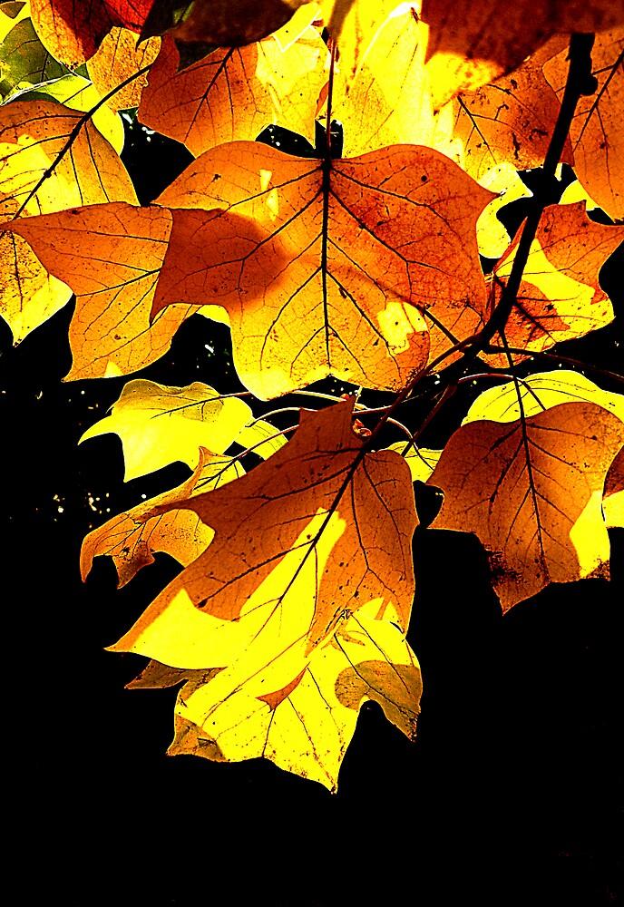 Autumn by CatharineAmato