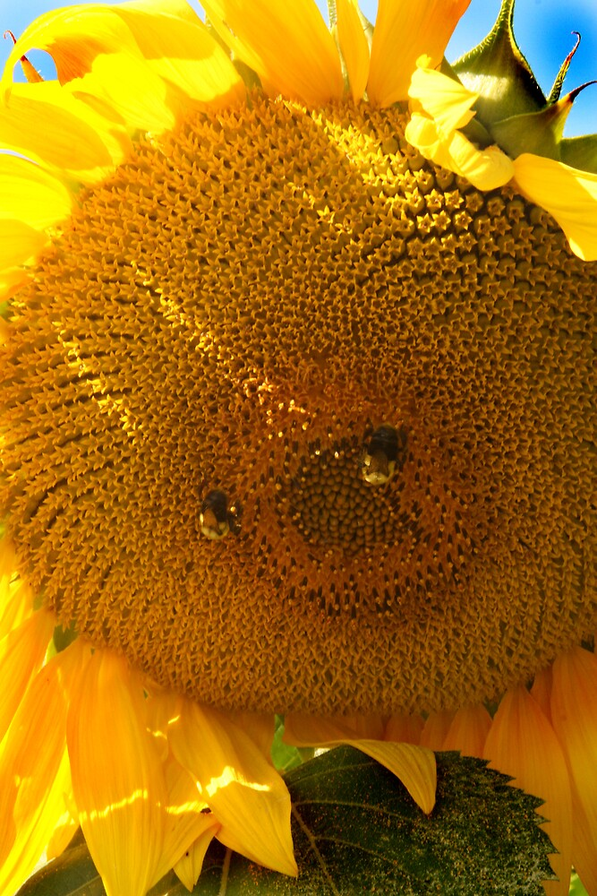 Two bees make a sunny smiley face by oneline