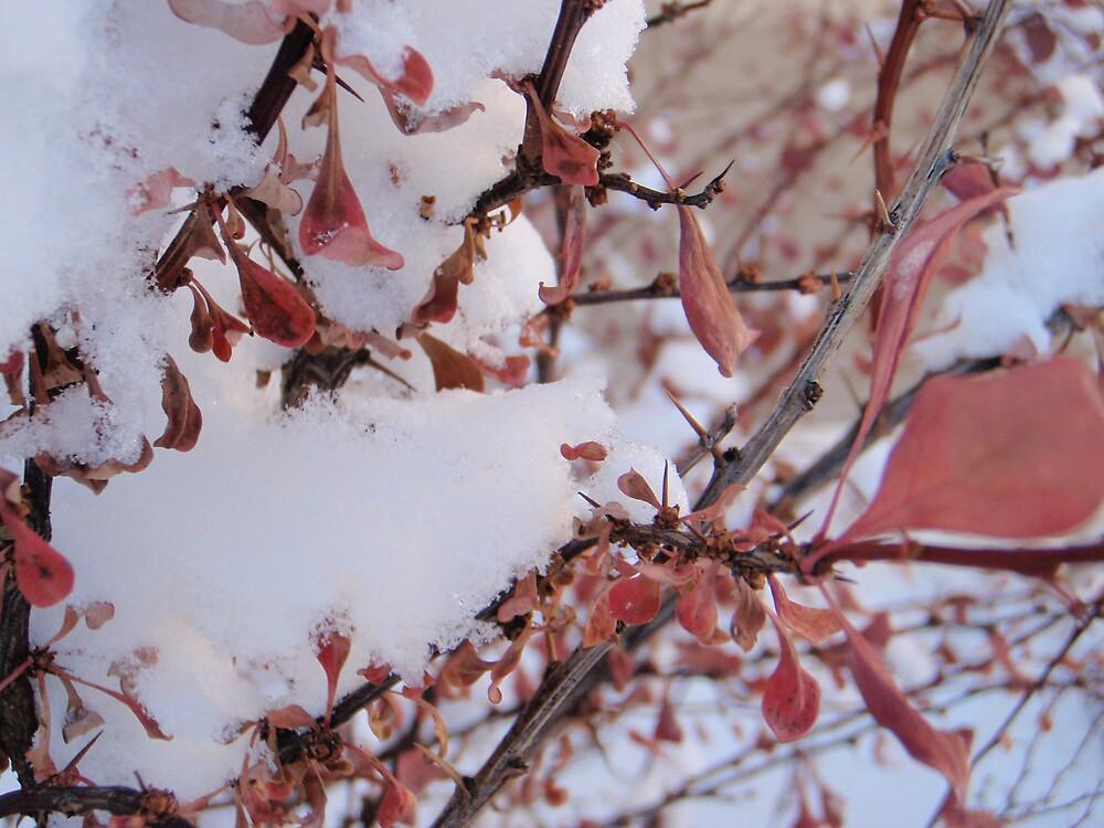 Snowy Bush by heathernicole00