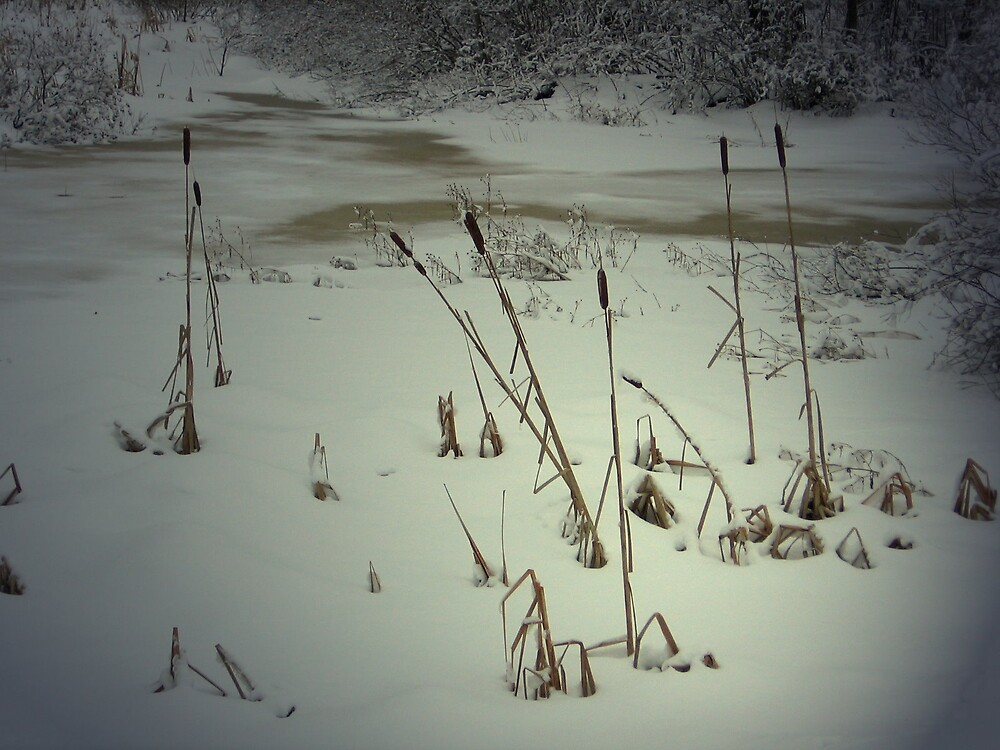 Frozen cattails by gwensgems668