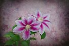 Clematis by Elaine Teague