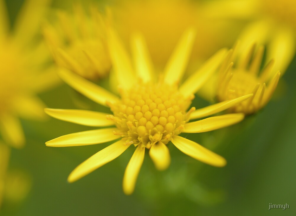 yellow flower by jimmyh