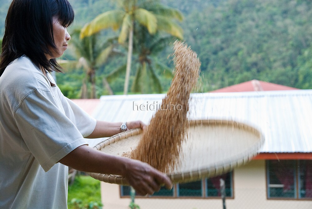 Sabah hill villager sorting rice by heidiwho