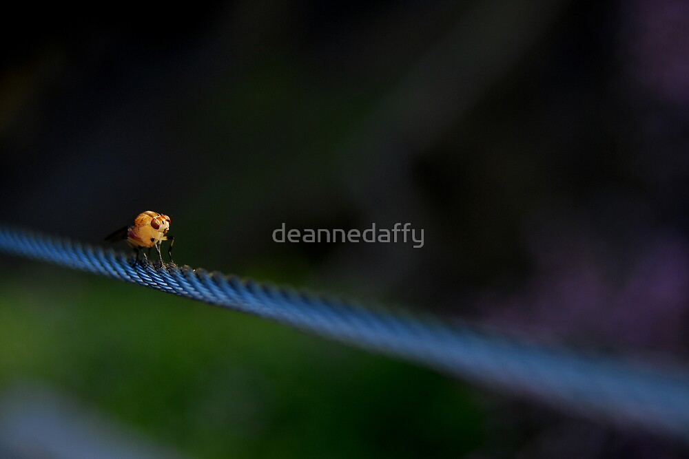 The Tightrope by deannedaffy